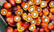 India suspends 39 import licenses for refined palm oil