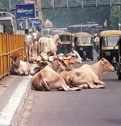 Government plans to slap higher penalty for cruelty against animals